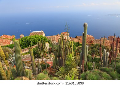 Botanical garden of Eze, with various cacti on foreground, aerial view, French Riviera, Europe