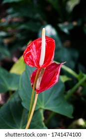 Botanical Garden Flower in July