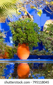 Botanical garden Jardin Majorelle in Marrakesh or Marrakech in Morocco