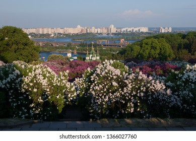 Botanical Garden, Kyiv, Ukraine. View of the Vydubychi Monastery and the River Dnieper. Spring landscape with blooming lilac