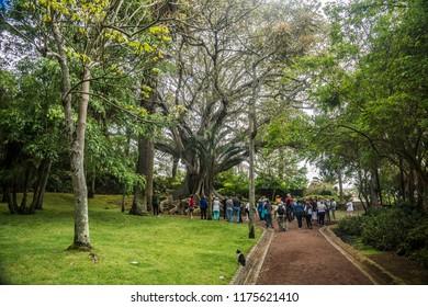 Botanical Garden in Sao Miguel Island, Azores archipelago, Portugal, Europe