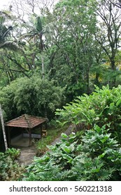 Botanical garden in tropical rainforest. Alcove between exotic palms and high bamboo.