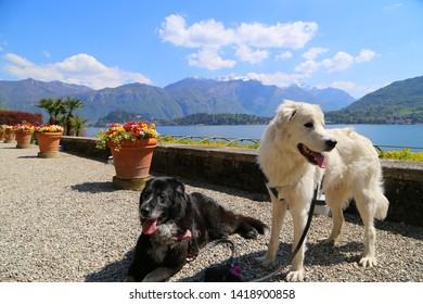 Botanical Garden of Villa Carlotta, Tremezzo, Lake Como, Italy