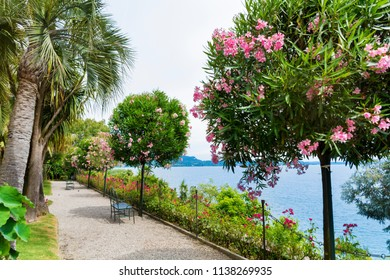 Botanical  Gardens with Oleander Trees and Palms of Island Madre.Isola Madre, is one of the Borromean Islands of Lake Maggiore in Piedmont ,North of Italy.