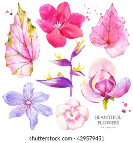 Botanical illustration with realistic tropical flowers and leaves. Watercolor collection of pink lily, magnolia, strelitzia, begonia, geranium and clematis. Handmade painting on a white background.