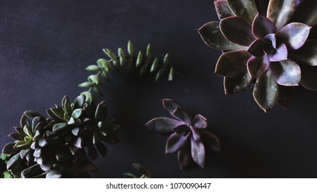 Botanical nature background with succulents. Urban jungle inspiration. Moody photography. Succulent beauty
