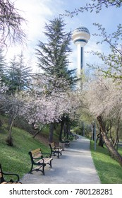 Botanical Park in spring time with blossoming trees - Ankara, Turkey