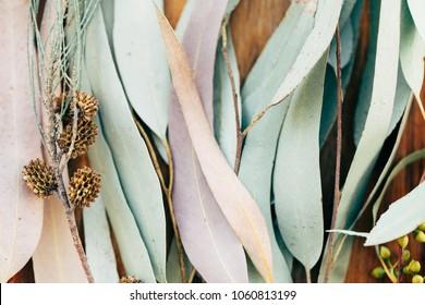 Botanical print, eucalyptus leaves closeup on wooden background