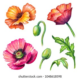 Poppy stock images royalty free images vectors shutterstock botanical watercolor illustration colorful poppies collection bouquet arrangement design elements rustic poppy mightylinksfo