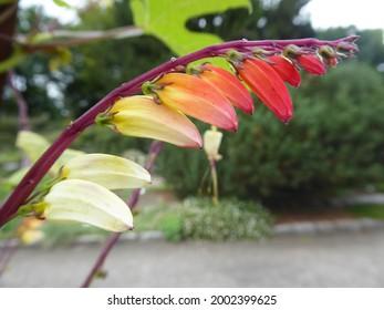 Botanika in Bremen (park, garden) - Shutterstock ID 2002399625