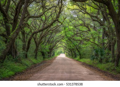 Botany Bay dirt road in South Carolina.