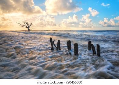 Botany Bay Tree Boneyard Beach Edisto Island Charleston South Carolina SC Lowcountry