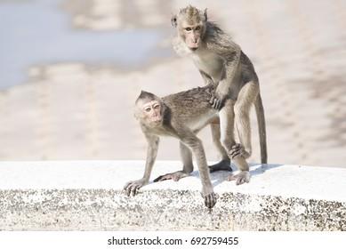 Congratulate, Women having sex with a monkey