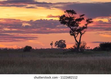 Botswana landscape view of trees and sky ready to rain at Kalahari desert, southern Africa.