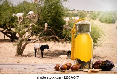 Bottle of argan oil and fruits for skin care Argan tree in the backgruond with goats eating Argan fruits