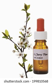 Bottle with Bach Flower Stock Remedy, Cherry Plum(Prunus cerasifera)