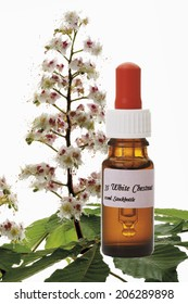 Bottle with Bach Flower Stock Remedy, White Chestnut (Aesculus hippocastanum)