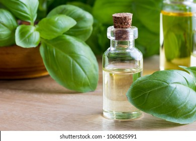 A bottle of basil essential oil with fresh basil leaves on a table