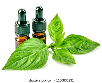 Bottle of Basil extract essential oil and Basil isolated on white background. cosmetic and therapeutic extract Basil oil