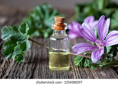 A bottle of common mallow essential oil with fresh malva sylvestris plant