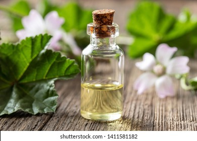 A bottle of common mallow essential oil with fresh blooming malva neglecta plant in the background