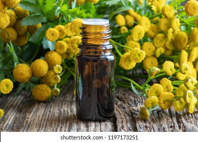 A bottle of common tansy essential oil with fresh blooming Tanacetum vulgare