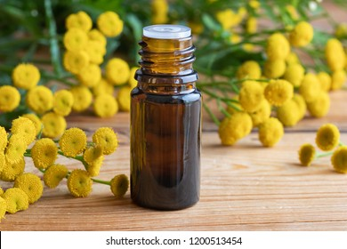 A bottle of common tansy essential oil with fresh blooming Tanacetum vulgare twigs