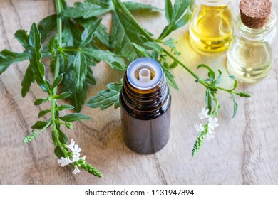 A bottle of common vervain essential oil with fresh blooming verbena officinalis plant
