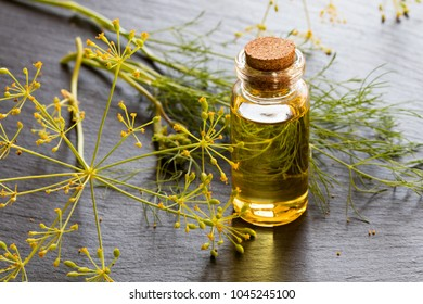 A bottle of dill seed oil with fresh dill on a dark background