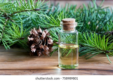 A bottle of Douglas fir essential oil with young Douglas fir branches