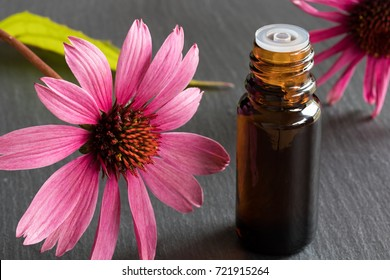 A bottle of echinacea essential oil with fresh echinacea flowers on a dark background
