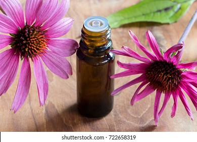 A bottle of echinacea essential oil with fresh echinacea flowers on a wooden background