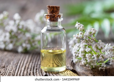 A bottle of essential oil with blooming valerian plant