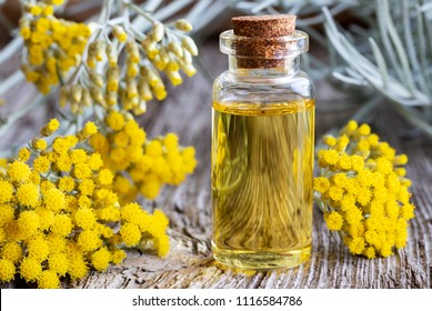A bottle of essential oil with fresh blooming helichrysum italicum plant