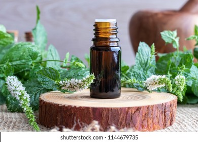 A bottle of essential oil with fresh blooming peppermint twigs