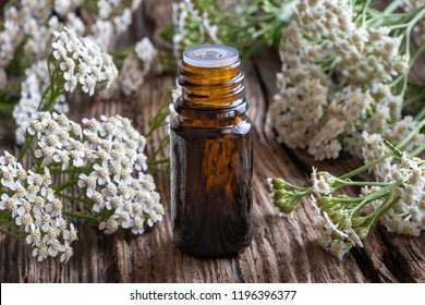 A bottle of essential oil with fresh blooming yarrow twigs