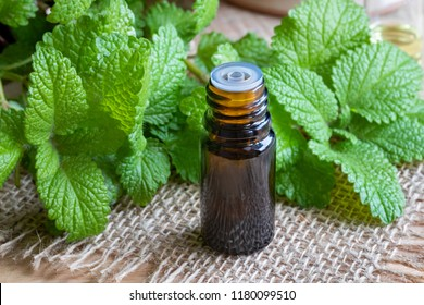 A bottle of essential oil with fresh melissa twigs