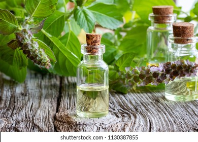 A bottle of essential oil with fresh tulsi, or holy basil
