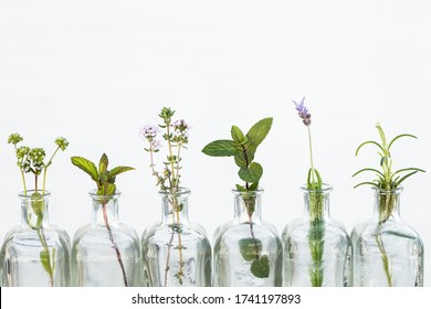 Bottle of essential oil with herbs lavender flower, rosemary ,flower of  canons,thyme, mint and peppermint set up on white background.