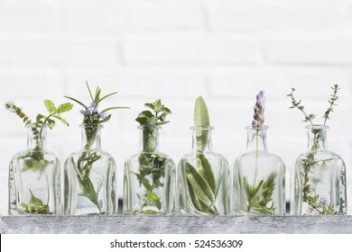 Bottle of essential oil with herbs lavender flower, basil flower,rosemary,oregano, sage, ,thyme and peppermint set up on white background .