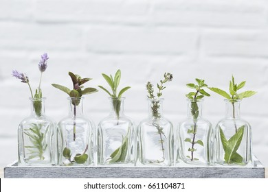 Bottle of essential oil with herbs lavender flower, sage, mint ,thyme and peppermint set up on white background