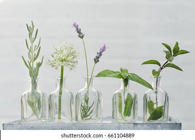 Bottle of essential oil with herbs lavender flower, curry, mint ,onion flower and basil set up on white background
