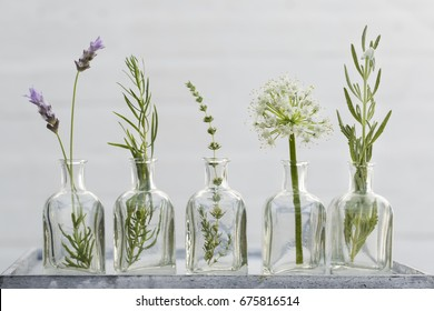 Bottle of essential oil with herbs lavender flower, sage, mint ,thyme and estragon set up on white background