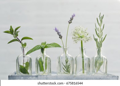 Bottle of essential oil with herbs lavender flower, basil, mint ,thyme and flower of onion set up on white background