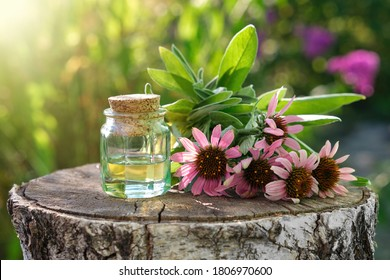 Bottle of essential oil or infusion, coneflowers and sage plants on stump outdoors. Alternative medicine.