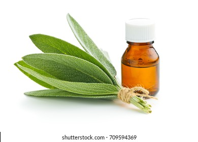 Bottle of essential sage oil and sage leaves. Sage isolated on white background.