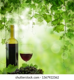 Bottle and glass of red wine in vineyard. Vineyard in morning light, bottle of red wine on the table