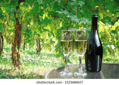 Bottle and glasses with wine in vineyard, grapes growing on vines