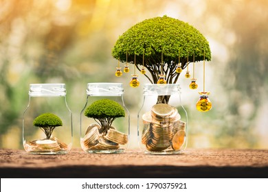 Bottle with gold coin and money bag of tree with growing put on the wood on the morning sunlight in public park, Saving money and loan for business investment concept.