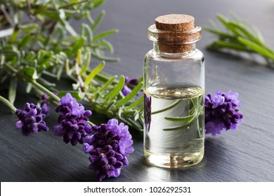 A bottle of lavender essential oil with fresh lavender twigs on a dark background